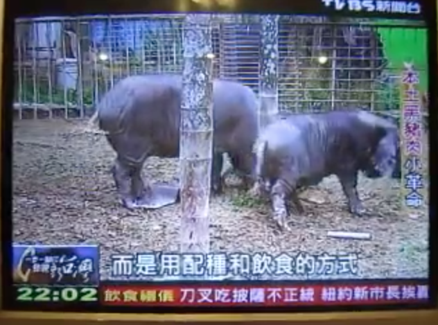 TVBS 一歩一腳印 東寶專題報導